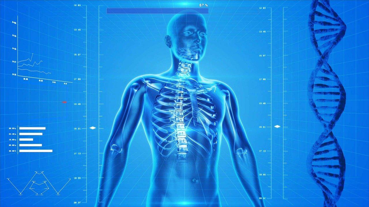 Complexité du corps humain