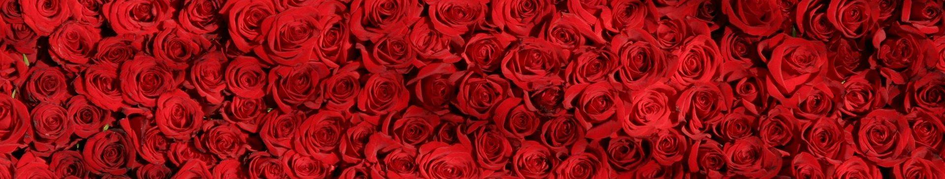 Roses serrées